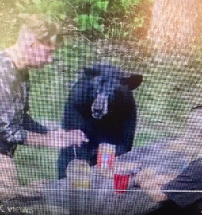 """Un """"amigable"""" oso se unió al picnic de una familia"""