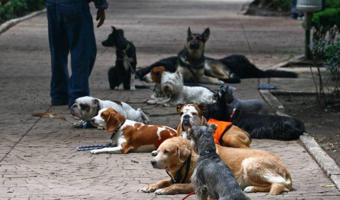 Aumenta robo de perros durante pandemia en el Reino Unido