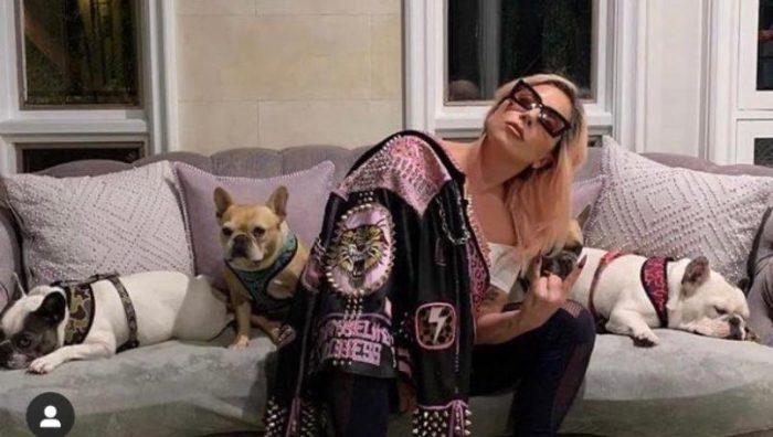 Policía arresta a 5 implicados en el secuestro de los perros de Lady Gaga