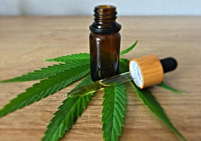 De la siembra a la investigación: las claves para entender la regulación medicinal de cannabis en México