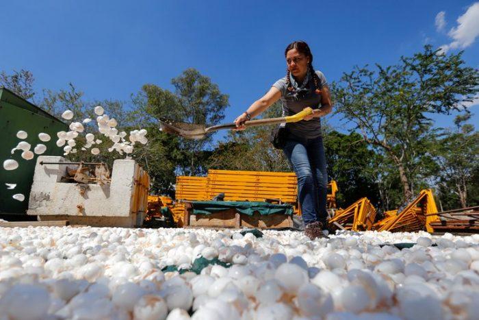 La innovadora iniciativa para limpiar uno de los ríos más contaminados de México con cascarones de huevo