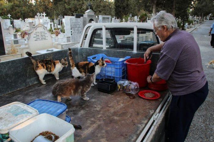 El dilema de Chipre: sufre por la superpoblación de gatos pese a sus históricos lazos con los felinos