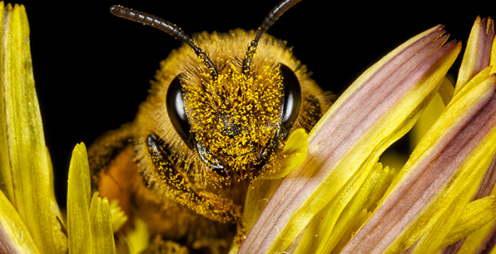 Dice la abeja que hoy está muy triste