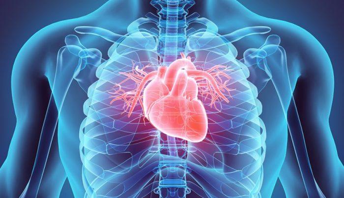 El corazón por dentro luego del COVID-19: cómo queda el motor de nuestro cuerpo después de tener el virus